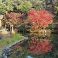 東山植物園2