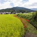 Photos: 秋の畦道