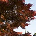 写真: 比叡山延暦寺の紅葉4