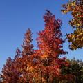紅葉する木々
