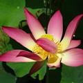 写真: 花の命は・・・