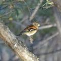 Photos: 冬鳥