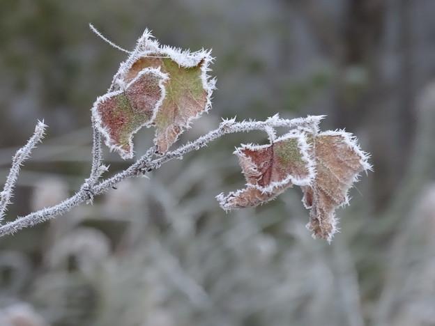 Photos: 凍てつく秋