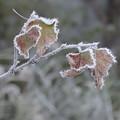 凍てつく秋