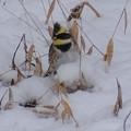 写真: 雪野原