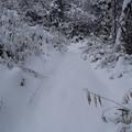雪の散歩道 1