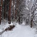 雪の散歩道 2