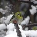Photos: なごり雪