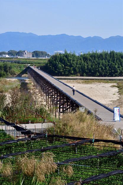 2016_1030_100126 八幡流れ橋