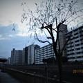 写真: 小名木川遊歩道