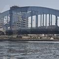 Photos: Tokyo水辺エコツアー@隅田川の永代橋_DSC_5748