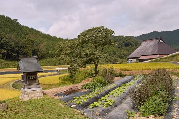 小さな祠と柿の木と茅葺民家