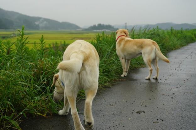 雨の日散歩
