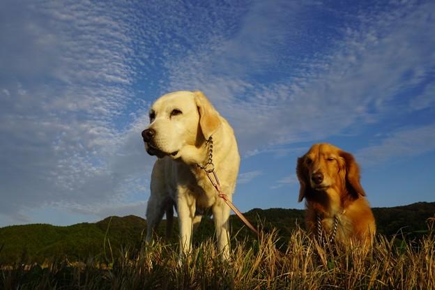Photos: 空と雲とわんこ