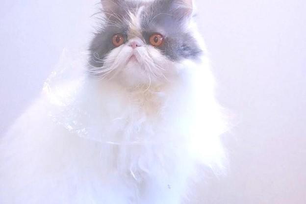 写真: レジ袋王子
