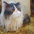 写真: 毛糸猫2