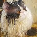写真: 毛糸猫