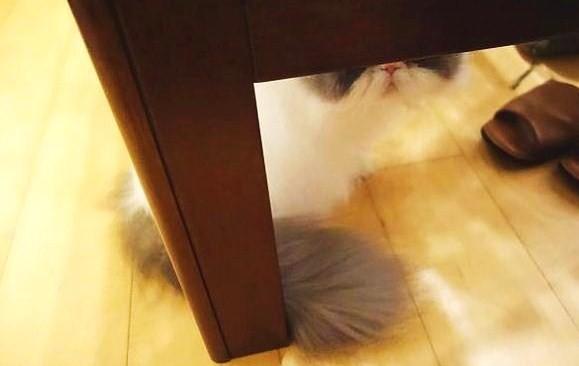 写真: 隠れんぼ