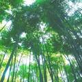 写真: 報国寺の竹林 (3)