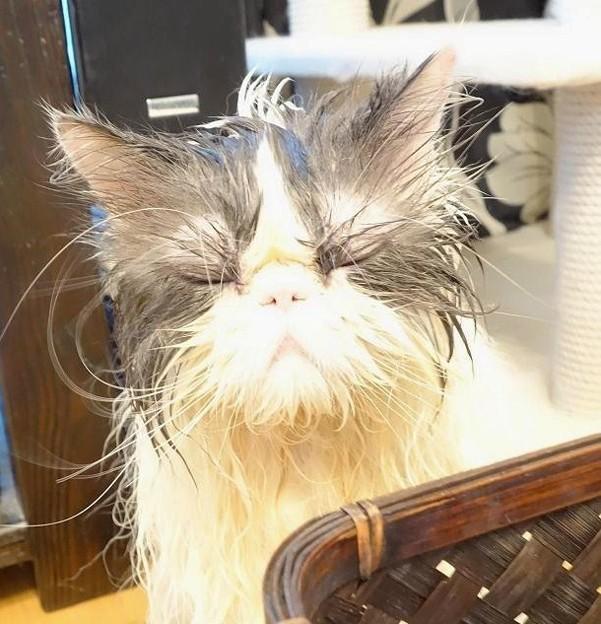 あ~哀愁猫