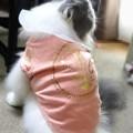 写真: ピンクを着た仔 (2)