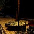 写真: 初雪の置き土産 (2)