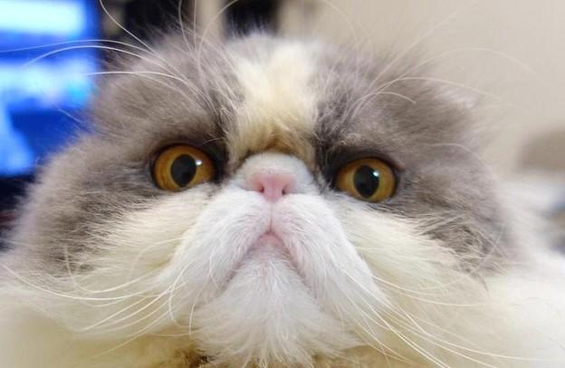 PC前で頑張る猫 (1)