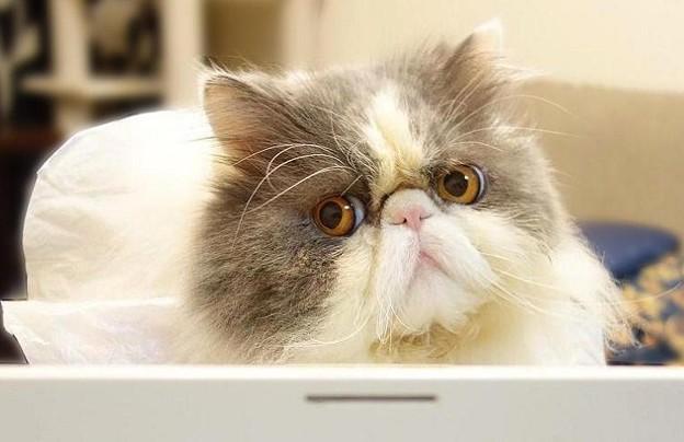 PC前で頑張る猫 (3)