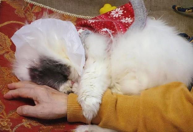 写真: しがみついて眠る仔 (2)