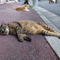 Photos: お疲れちゃん