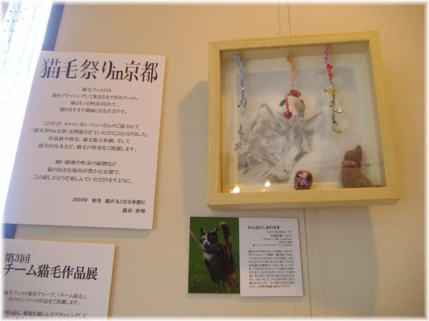 猫毛祭りin京都