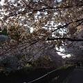 Photos: 善福寺川緑地公園3