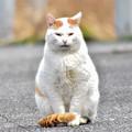 野良猫-6