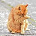 野良猫-7