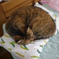 Photos: 枕の上で昼寝