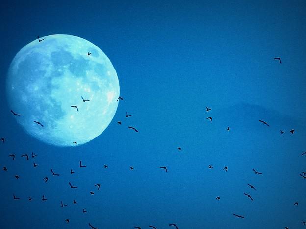Photos: 月の光に乱舞する