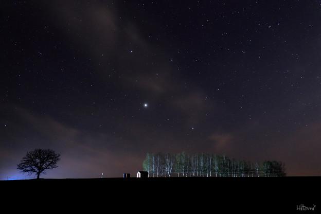写真: 白樺並木と星空