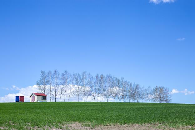 写真: 天空の丘