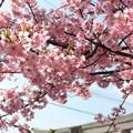 桜咲く神社 (1)