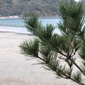 写真: 波当津海岸1