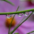 Photos: 雨上がりの水滴