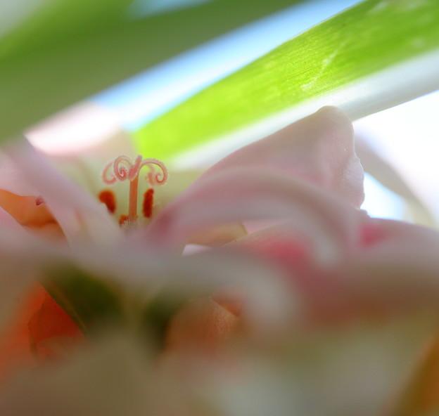 写真: 恋しくて春^^