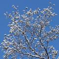写真: 春の花咲く