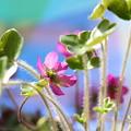 新葉と小花