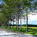 並木道とひまわり畑