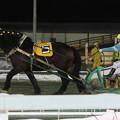 オホーツクノタカラ レース(17/01/21・9R)