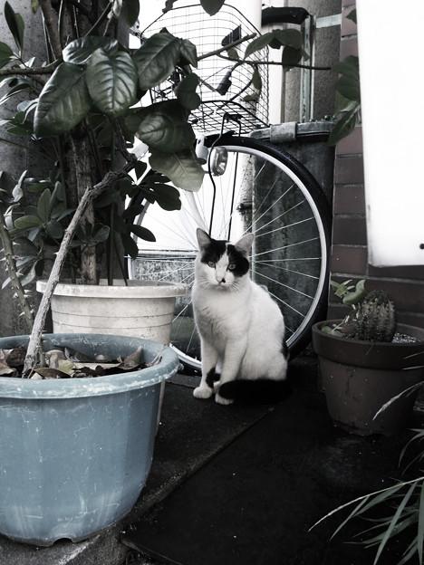 植木鉢バリケード