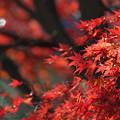 写真: 秋にさよなら