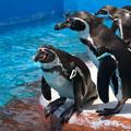 写真: ペンギンプール