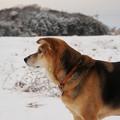 Photos: 雪に親しむ